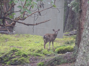 wee deer munching the fallen branches at the W's