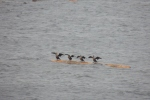 birds on a log